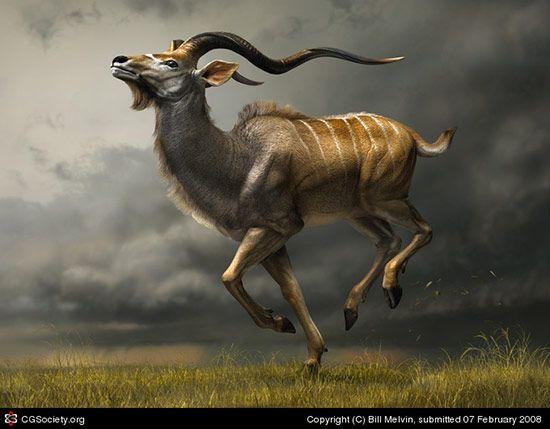Charging Kudu, Bill Melvin
