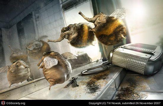 Shaved Bumblebee, Till Nowak