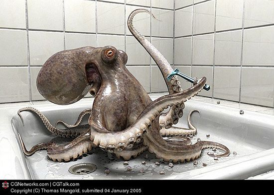 Octopus In The Bathroom, Thomas Mangold